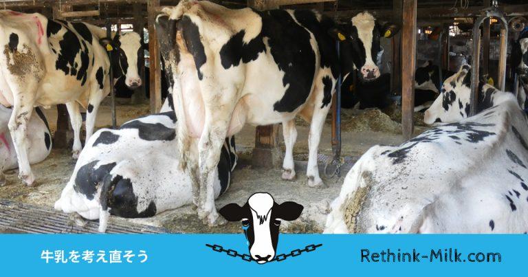 牛乳を考え直そう。日本中から牛のつなぎ飼いをなくそう。